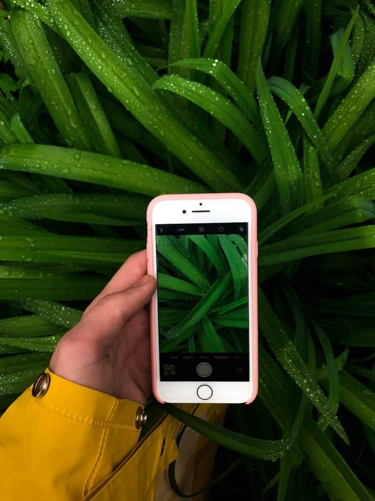 Consulenza Vegetale Online